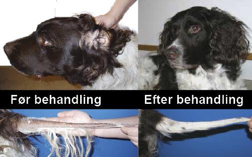 hund før og efter